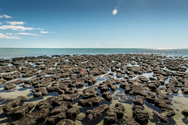 Hamlin Pool (Western Australia)