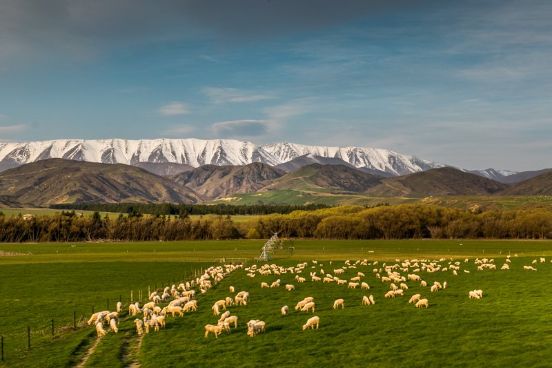 On the road to Queenstown (South Island, New Zealand)