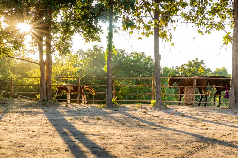 horse and golden hour @ Second Wind Ranch & Rescue