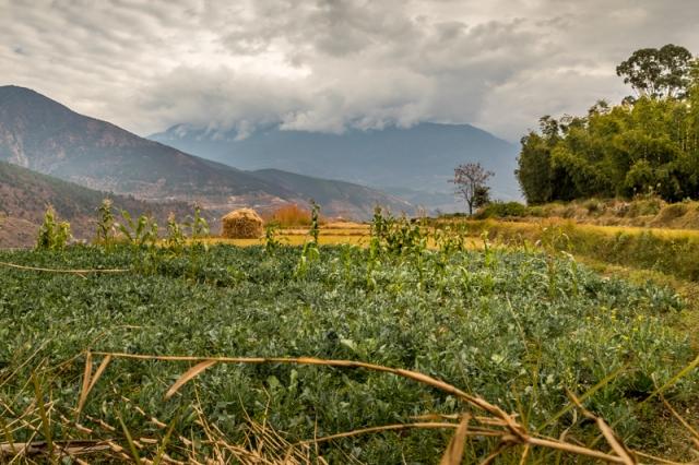 Chime Lhakhang - Bhutan
