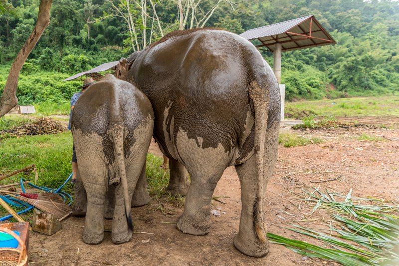 Lanna Kingdom Elephant Sanctuary, Chiang Mai