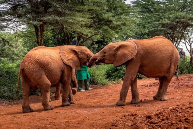 David Sheldrick Elephant Orphanage